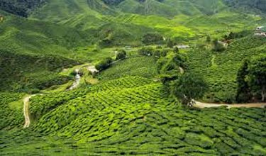 Mirik, Darjeeling and Kalimpong Tour