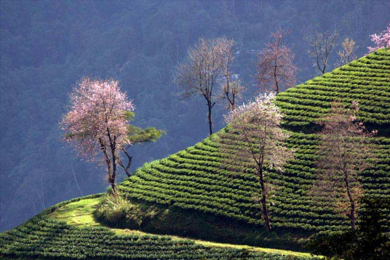 Darjeeling - kalimpong Tour Package
