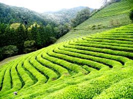 Ooty Package for 5 Days Tour