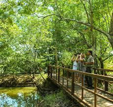 Experience Wayanad with CGH  Tour