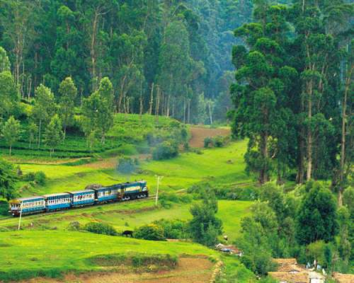 Bangalore - Mysore - Ooty - Bangalore (03 nights 04 days)