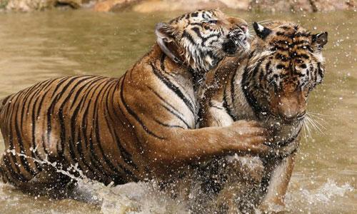 Rajasthan Tiger Trails Tour