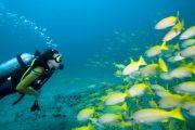 Scuba Diving in Baina Vasco Tour