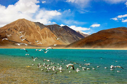 Amazing Leh Package