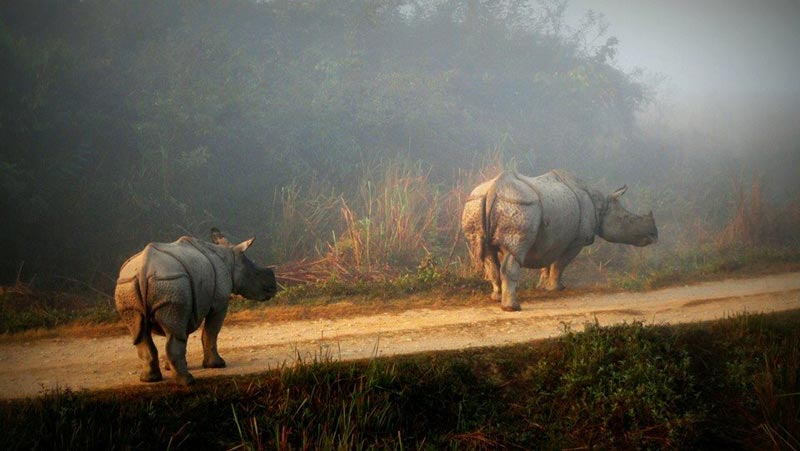 Kaziranga Jungle Safari