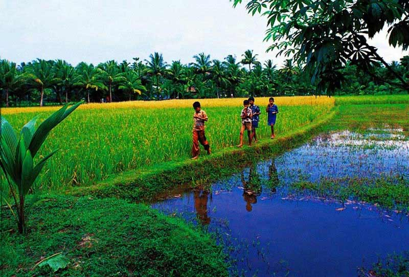 Beautiful Nature View of Kerala Tour