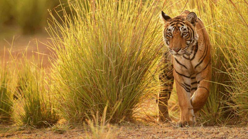 Pachmarhi 03 Days Tour For Couple & Family Pench National Park Tour