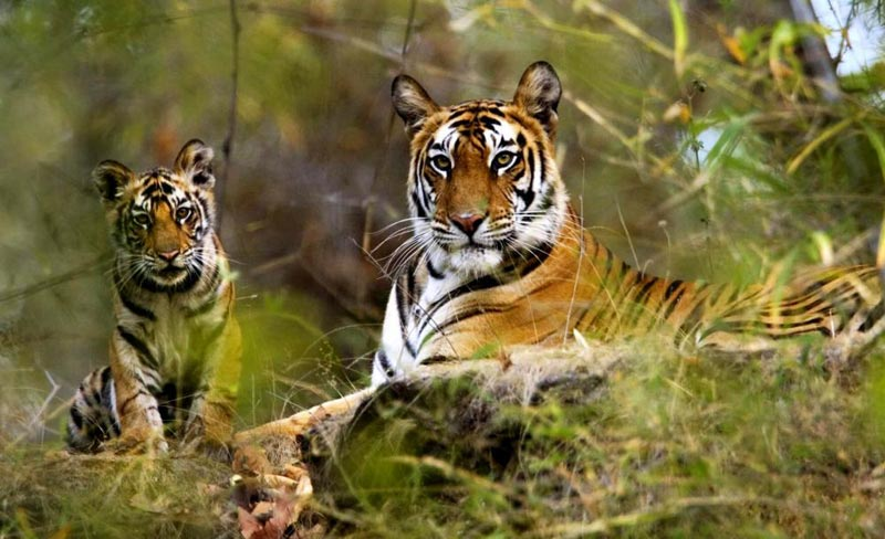 Kanha 3 Days Tour For Couple & Family Kanha National Park