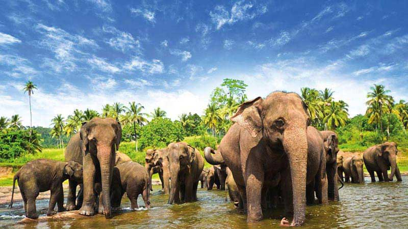 Highlights of Sri Lanka  5 Nights/ 6 Days tour