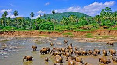 Highlights of Sri Lanka 6 Nights/ 7 Days Tour