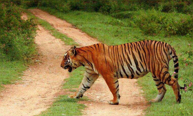 South India Tour with Wildlife