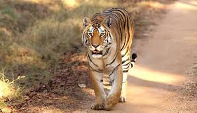 Wildlife Tour of Madhya Pradesh