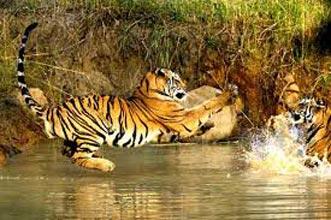 Holiday Wild Life Tour (Jabalpur - Kanha - Pachmarhi - Jabalpur