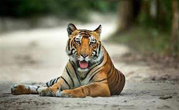 Short Escape to Corbett Package