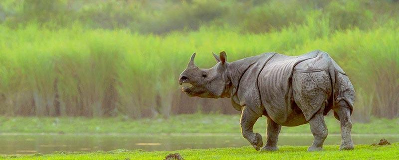 Kaziranga Safari Tour