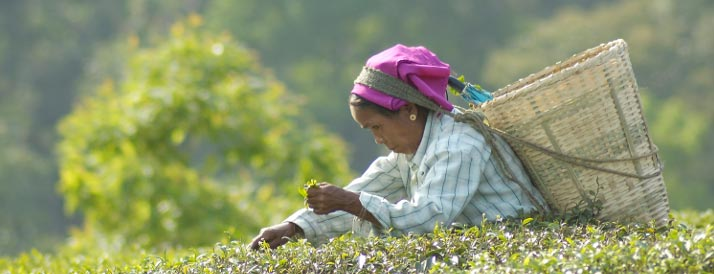 Tranquil Tea Tour Eco Village Tours