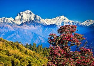 04 Nights/05 Days  2 nights Kathmandu, 1 night Pokhara & 1 night Jomsom By Air Tour