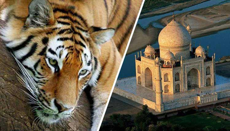 Taj and Wildlife Tour