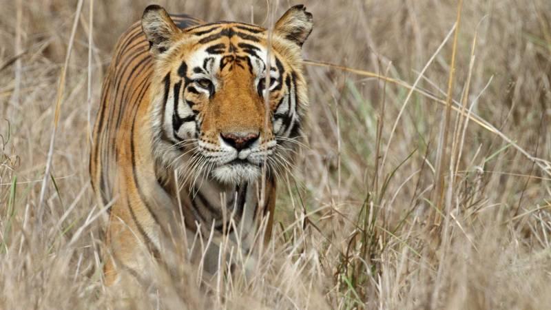 Tiger Trails Tour 07 Nights & 08 Days