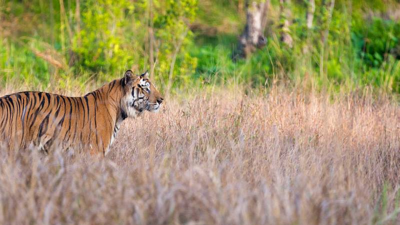 01 Night & 02 Days Bandhavgarh National Park Tour Package