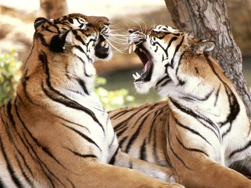 Kanha Jangale Safari Park Tour Package
