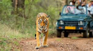 Kanha Tiger Reserve Tour Package from Delhi