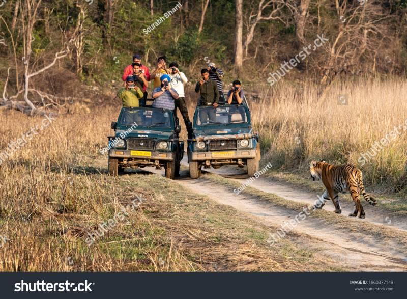 Kanha Tiger Reserve Safari Booking