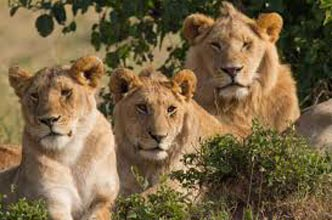 Short Escape to Gir National Park Tour