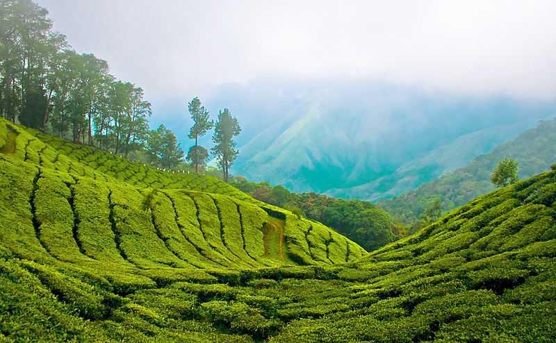 Kerala Tour 6 N/ 7 D