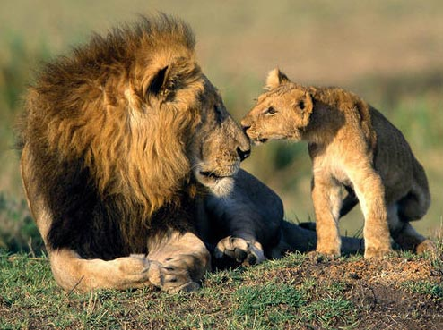 Gujarat Gir National Park Tour Package - 5 Days