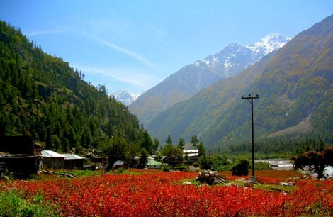 ,shimla,Kinnaur,Manali,Amritsar Honeymoon Package
