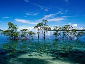 Wonderful Andaman Tour Package