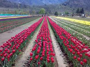 Charming  Kashmir 3N-4D Package