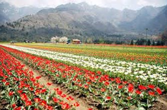 A Paradise Called Kashmir 7N-8D Package