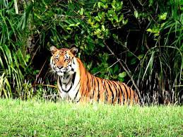 Royal Sunderban With Exotic Kolkata Tour