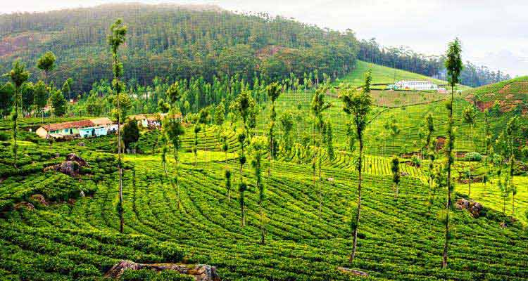 Kodaikanal Tour 5Days