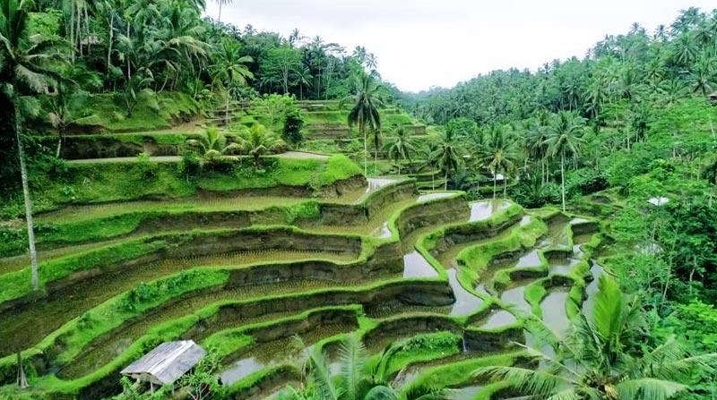 6 Nights / 7 Days Bali Honeymoon Package