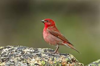 Himachal Bird Watching Tours