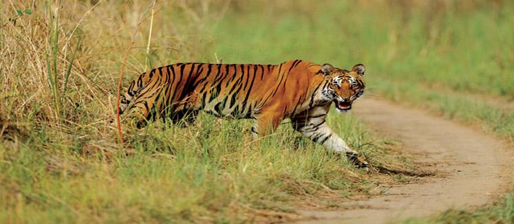 Uttarakhand - Budget - Delhi - Nainital - Bhimtal - Jim Corbett - Delhi