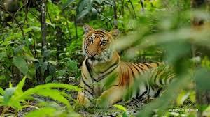 History to Safari Tour - Kathmandu & Chitwan