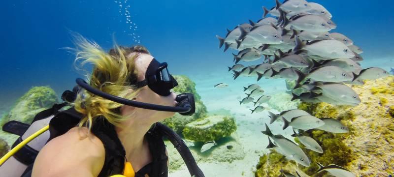 Scuba Diving At Netrani Island (code: Tr Dly F)
