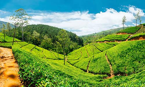 Sri Lanka Tour