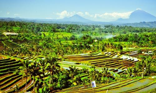 Way to Bali Tour