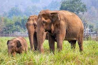 Elephant Trail 6 Days Kochi Munnar Kumarakom Kodanad package