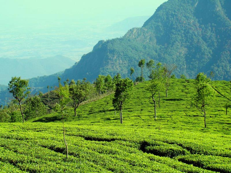 Nilgiri Tour Package