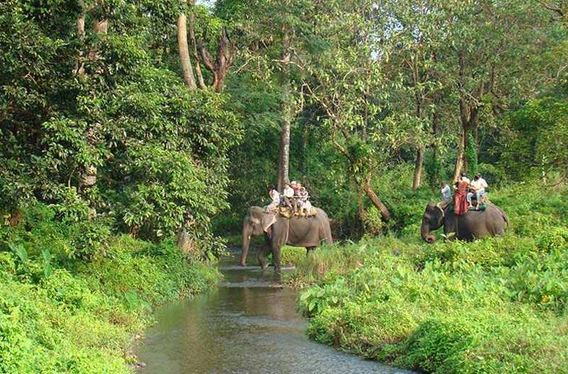 Jayanti - Aliporeduar -Lataguri - Garumara Tour