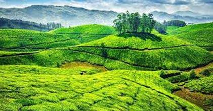 Kerala 4N/5D Tour