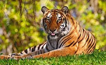 Jim Corbett Safari Tour 2N 3D