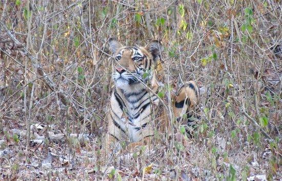 Kabini, Bandipore,Madhumalai National Park ,With Ooty Tour