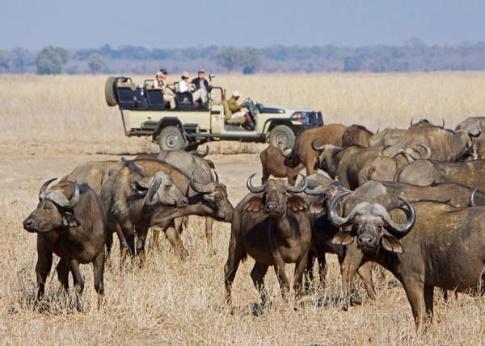 South Luangwa Lower Zambezi & Kafue National Park Safari Package